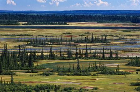 Foresta di transizione nell'Alberta settentrionale